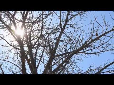 Baobab collection and processing in Chimanimani