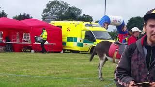 Donkeys at kids fest