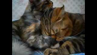 Кошачья любовь Мурки и Лорда (Cat`s love) .AVI