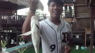 Download Mancing Nila Babon Di Teras Empang Pakai Hati Ayam. Sensasinya Luar Biasa.