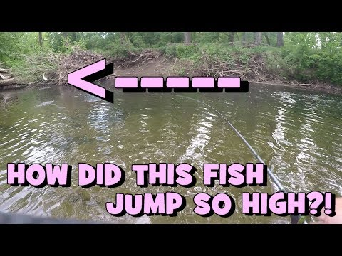 "That Fish JUMPED PRETTY HIGH!!! Hunting for the ""Waterfall Fish"" again -- PART 2"