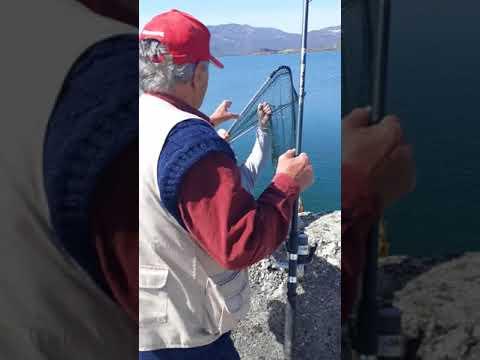 Šaran 2kg,Slano jezero Niksic.