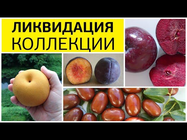 Полная ликвидация весенней коллекции саженцев (скидки более 45 %) - акция для жителей Самары!