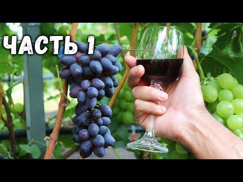 """🍷  Приготовление домашнего вина  из винограда """"кишмиш Юпитер"""" Часть1 🍇"""