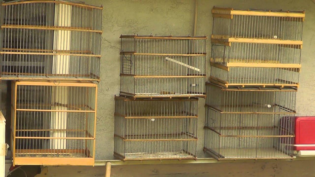 Jaulas Artesanales Home Made Wood Bird Cages Youtube