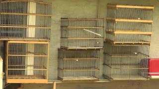Jaulas Artesanales = Home Made Wood Bird Cages