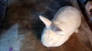 кролик чихает, хрипит - это ринит!!!!!!!(симптомы и лечение ринита. Хотите, чтоб ваш канал начал приносить максимальный доход? Подключайте его..., 2017-01-27T17:46:02.000Z)
