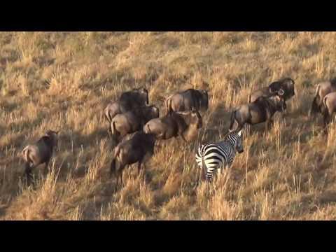 SANKALP TOURS & TRAVELS - KENYA SAFARI AUGUST 2016
