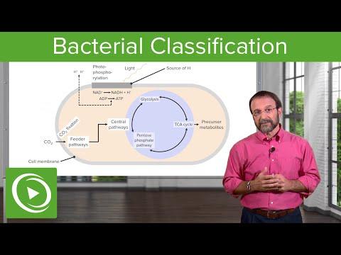 Bacterial Classification: Heterotrophs, Chemoautotrophs & Photoautotrophs – Microbiology | Lecturio