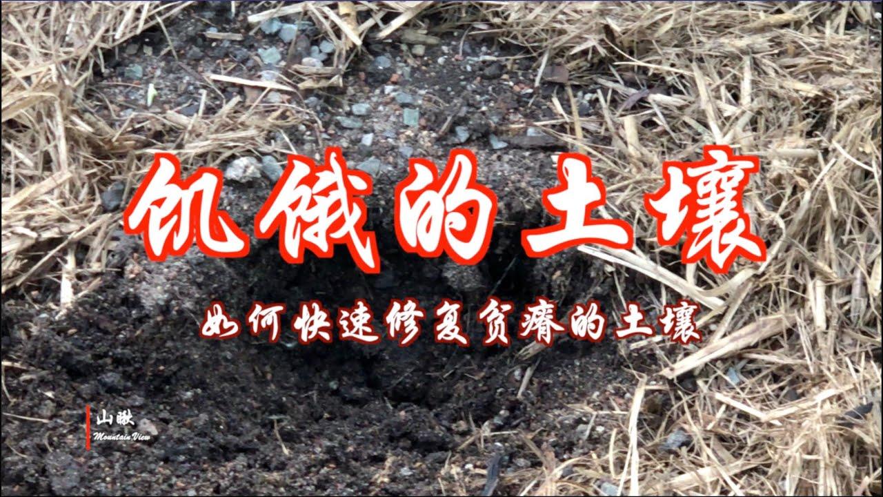 饥饿的土壤-如何快速修复贫瘠的土壤(第57期) How to rapidly improve poor soil (Ep57)