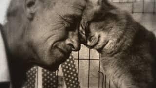 ЧИТАЮ СТИХИ.История про Кошку и ее Человека.