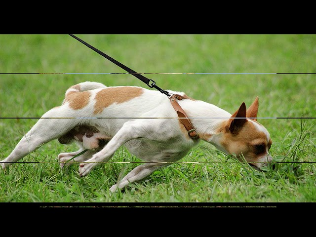 How to keep your dog from lunging at strangers
