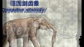 Proboscidea: evolution of elephants (pliocene and pleistocene): Stegodon