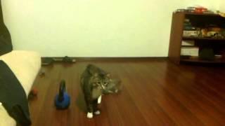 НОВИНКА!!!! самое смешное видео про котов.