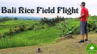✔ Bali, Rice Field Flight! Бали, Рисовые террасы!