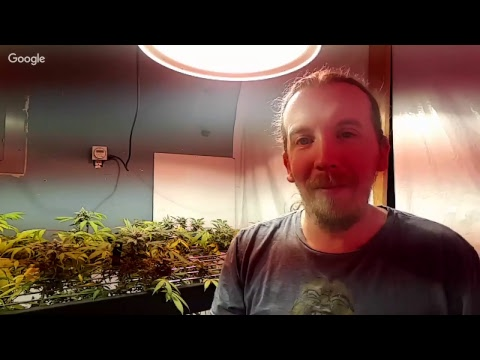 Online Aquaponic Cannabis Class Info May 20th and 21st & 110,000 channel views!