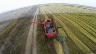 Rice harvest 2016