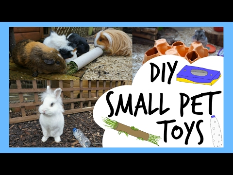 DIY Small Pet Toys | Pets Palace Kids