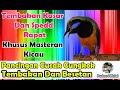 Masteran Cucak Cungkok Gacor Tembakan Kasar Dan Besetan Rapat  Mp3 - Mp4 Download