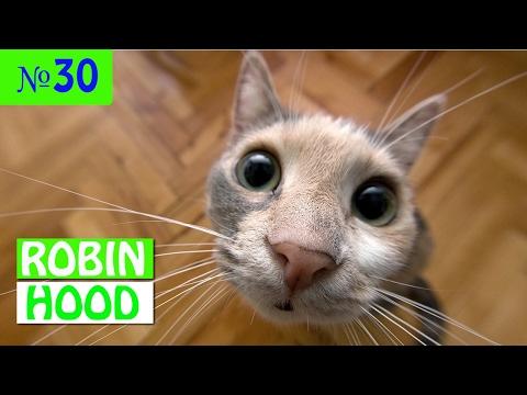 ПРИКОЛЫ 2017 с животными. Смешные Коты, Собаки, Попугаи // Funny Dogs Cats Compilation. Февраль №30