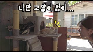나만 고양이 없어 ㅜㅜ 너무 귀여운 강아지와 고양이! …