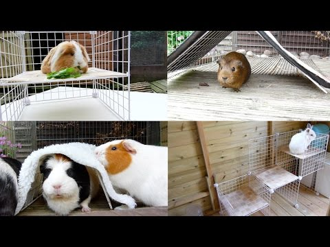 DIY: C&C Ideas For Guinea Pigs And Rabbits