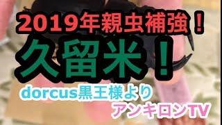 開封動画!2019年『久留米親虫補強!』