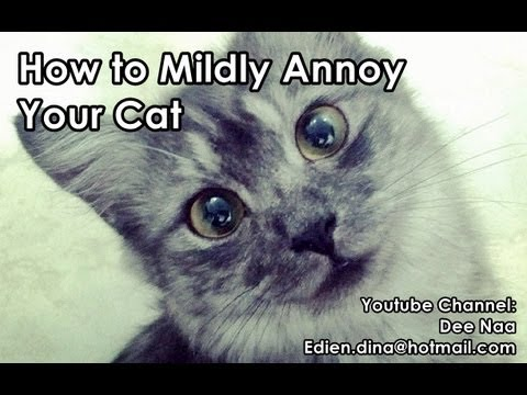 How To Mildly Annoy Your Cat