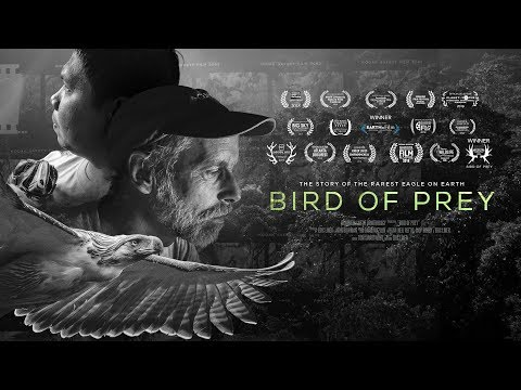 Bird Of Prey Movie: Trailer