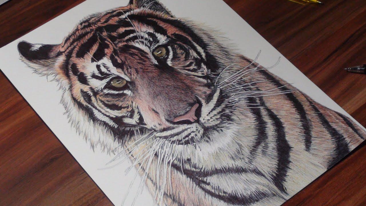 Realistic Tiger Pen Drawing - Demoose Art