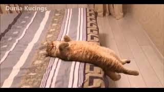 Gambar cover Kucing Galau 😹😹😹 bikin status WhatsApp