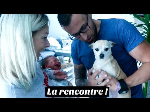 RENCONTRE BEBE ET CHIHUAHUA + UNBOXING / DAILYVLOG