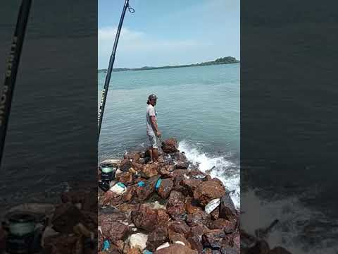 Tg. Teritip ikan cermin 5kg - YouTube