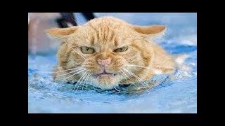 Funny Cats in Water Compilation 2018  - Reverse video