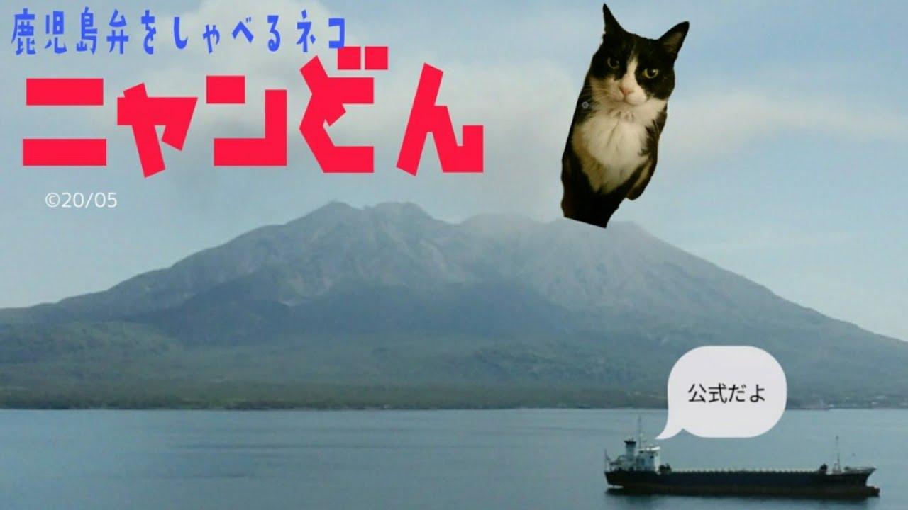 猫 鹿児島 弁 しゃべる