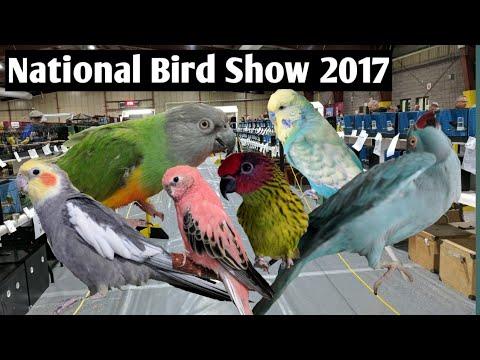 Canadian National Bird Show 2017 | Hookbills And Judging