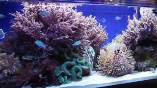 Обслуживание аквариумов Омск(, 2016-07-10T17:58:55.000Z)