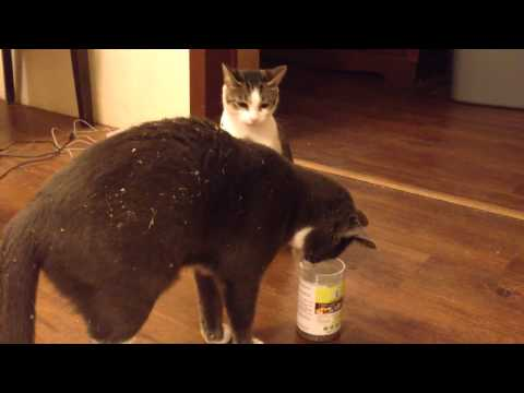 Cats And Catnip - Funny!