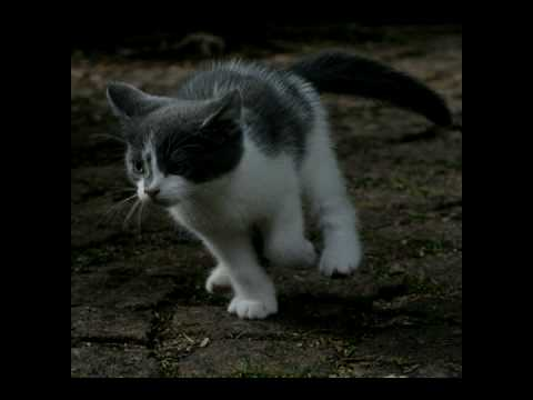 Run Kitty Run Music In the End