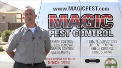Bee Control Maricopa Country | Magic Pest Control Call (602) 652-2021