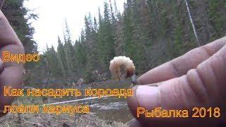 видео Рыболовная насадка короед