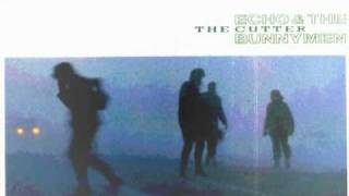 Echo and the Bunnymen - Zimbo (all my colors)