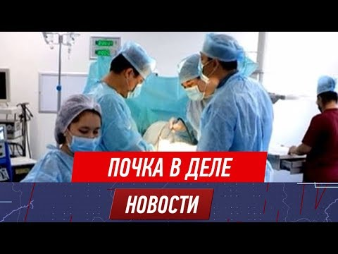 Покупали у бедных, пересаживали богатым – в больнице Шымкента незаконно изымали почки