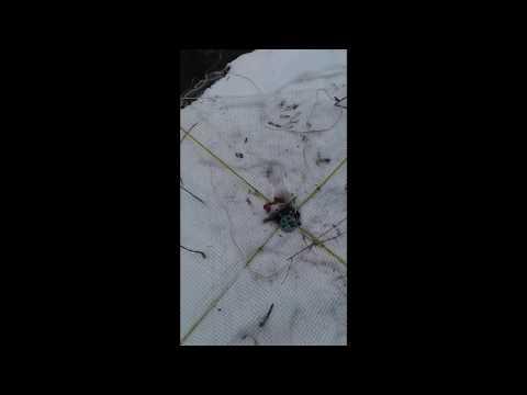 Рыбалка на пауки зимой