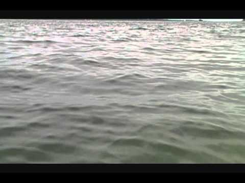 Dolphins in Saint Andrews Bay    Panama City Beach Florida.wmv