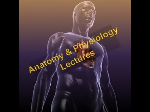 Orientation to the Human Body!!!