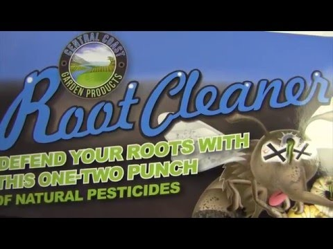 Root Cleaning in Rockwall
