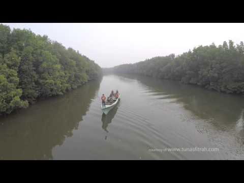 Hutan MANGROVE Balikpapan