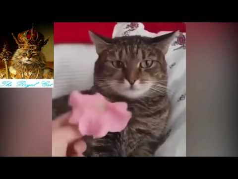 2K17 - The Best Scare Cat Compilation - Funny Cats - BestVine