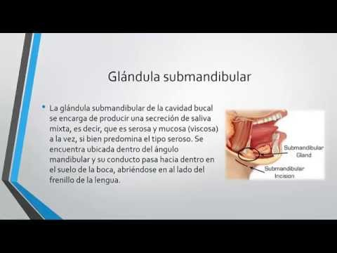 Glandula parotida y glandulas salivales - YouTube